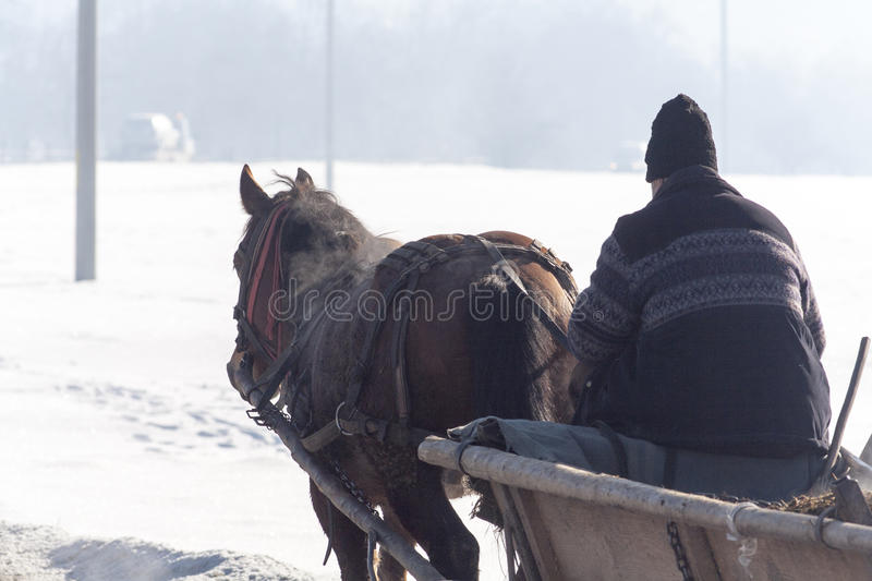 Old man in a horse cart in winter. An old man riding a horse cart in winter royalty free stock photo