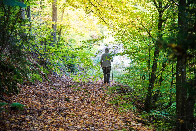 Old man walking alone. Old man walking in the forest royalty free stock photos