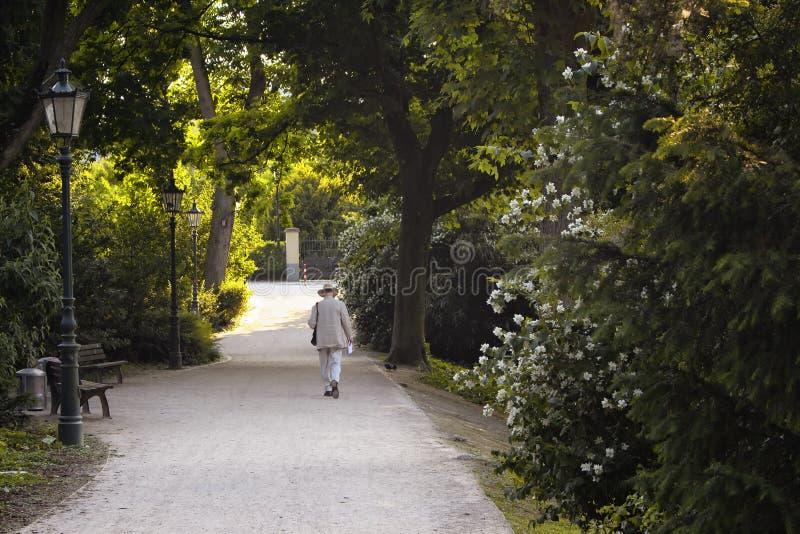 Old man walks royalty free stock photography