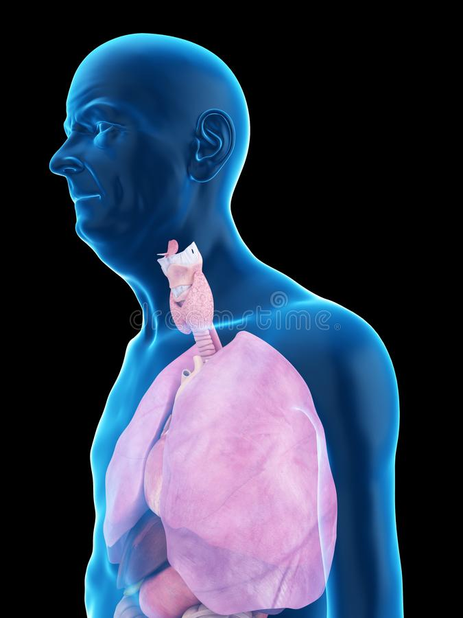An old mans lung. 3d rendered medically accurate illustration of an old mans lung vector illustration