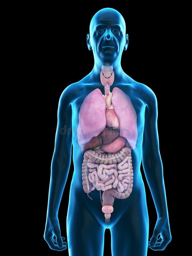 an old mans organs vector illustration