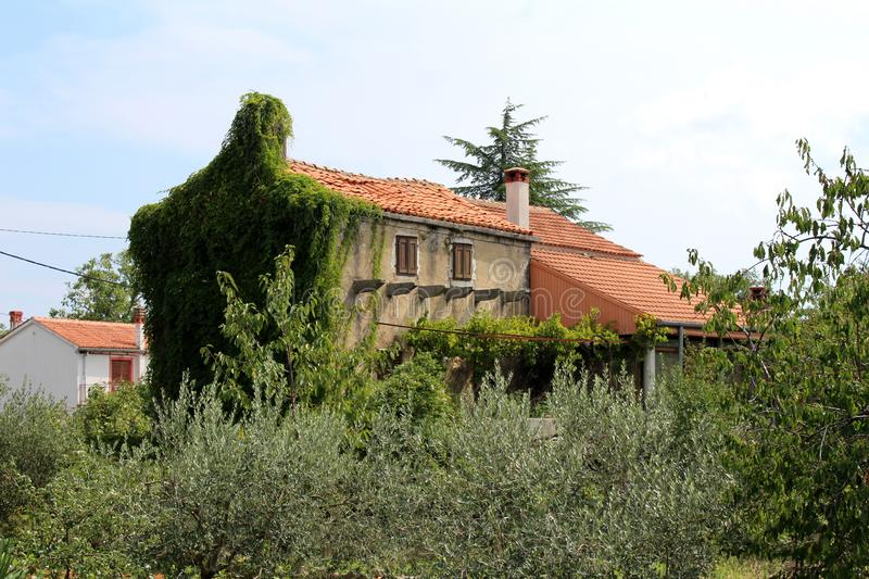 Old Mediterranean tall narrow family house with dilapidated facade and completely overgrown side with crawler plant surrounded stock image