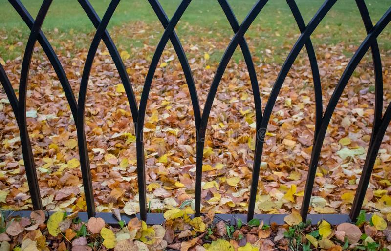 Old metal fence in city autumn park, tree with yellow foliage background. Town royalty free stock photography