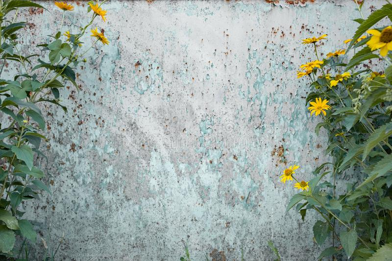 Distressed grunge background with wild flowers on the sides. royalty free stock photo