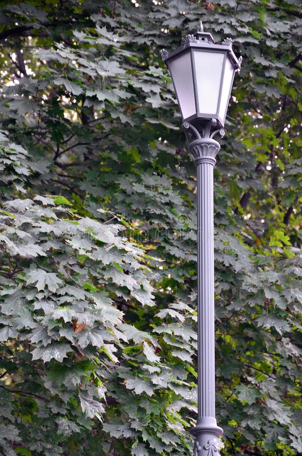 Old metal street lamp in black on a background of green leaves of a tree.  stock image