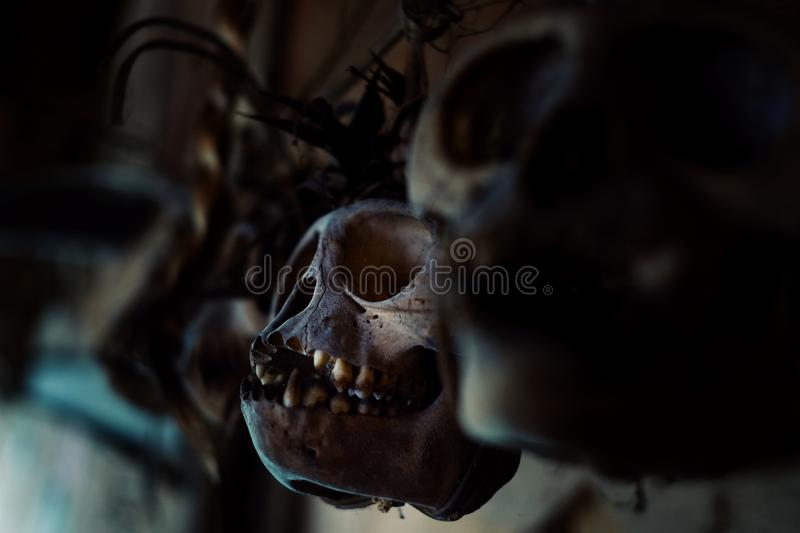 Old monkey skulls used as amulets to protect from the spirits of the ju. Muara Siberut, Mentawai Islands / Indonesia - Aug 15 2017: old monkey skulls used as stock photos