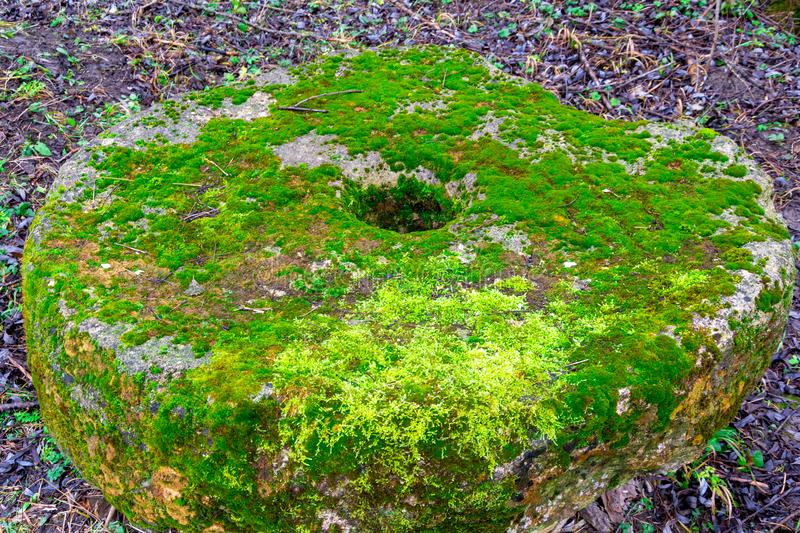 Old moss-covered stone millstone on the ground in a green grass background. Blue wild flowers of creeping speedwell grown in the h stock image