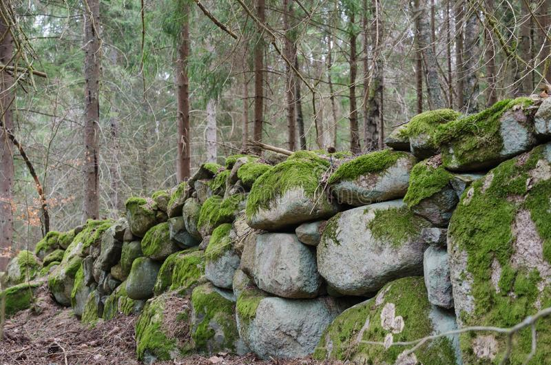 Old moss grown dry stone wall in a forest. Beautiful old moss grown dry stone wall in a coniferous forest royalty free stock image