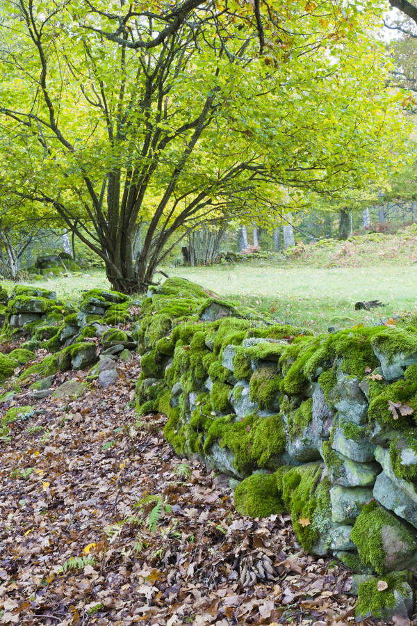 Download Old mossy stone wall stock photo. Image of scene, country - 19855530