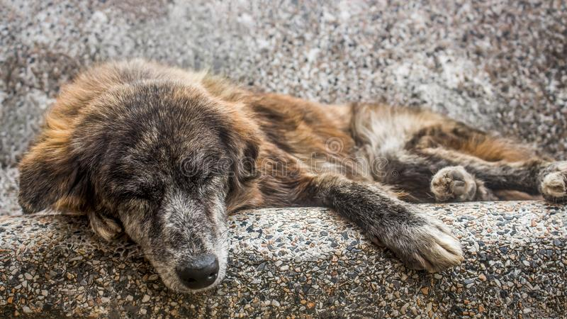 Old mutt sleeping outdoors in a stone bench. A sad and senior stray dog abandoned in the streets. Horizontal photo of an old mutt sleeping outdoors in a stone stock photo