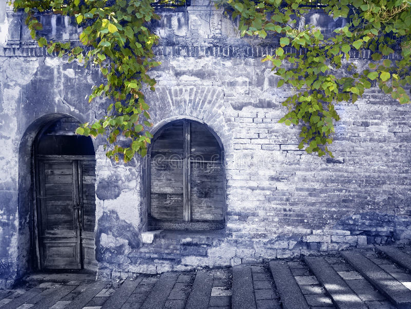 A Old Mysterious Wall with Grapes Plant in the Blue. royalty free stock photo
