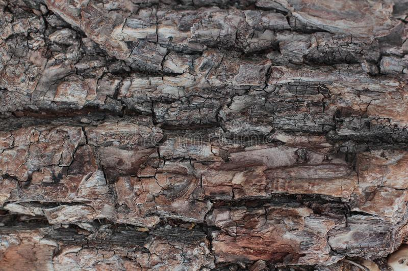 Old natural wooden shabby background close up, old wood background, texture of bark wood use as natural background royalty free stock photography