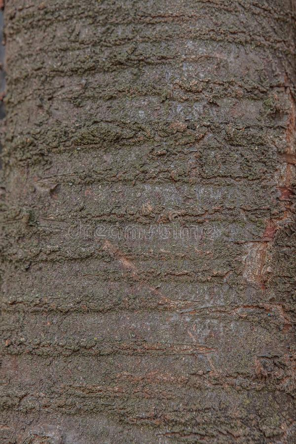 Old natural wooden shabby background close up, old wood background, texture of bark wood use as natural background stock photo