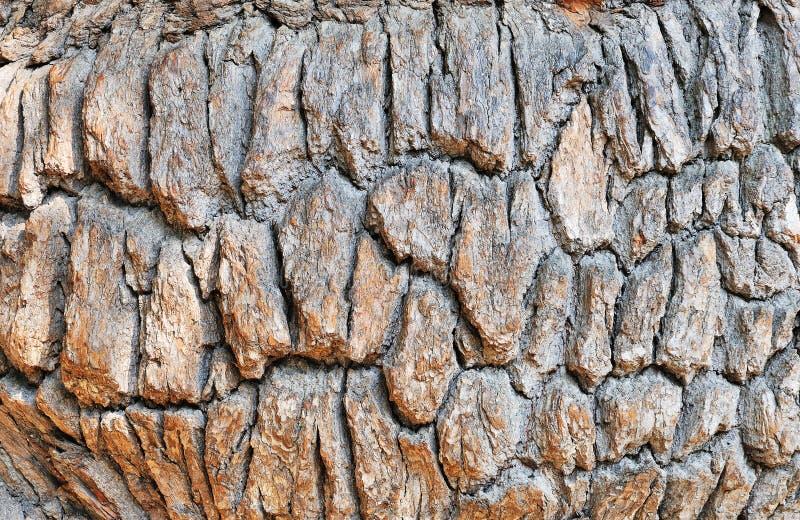 Old Oak Bark Royalty Free Stock Photos