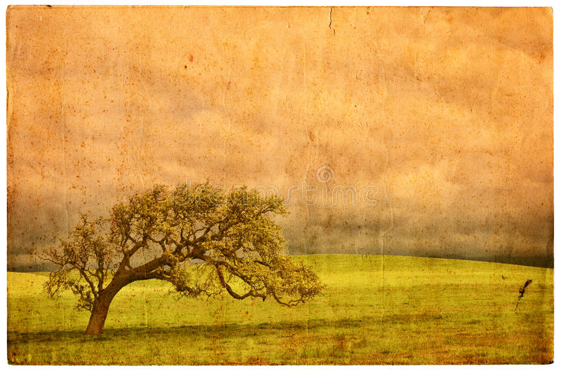 Download Old Oak Postcard stock photo. Image of artistic, distressed - 16359408