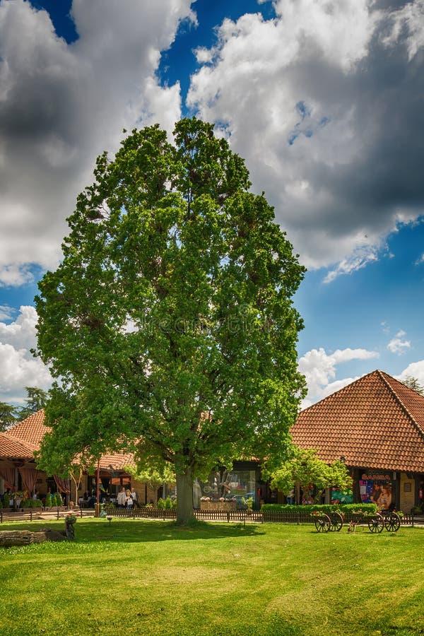 Old oak in Serbia. Svilajnac, Serbia May 17, 2017: Restaurant old oak in Serbia stock photos