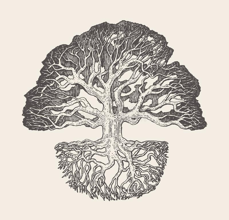 Free Old Oak Tree Root System Drawn Vector Illustration Stock Photography - 110660062
