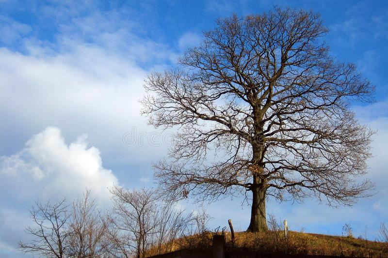 A old oak tree at top of hill royalty free stock image