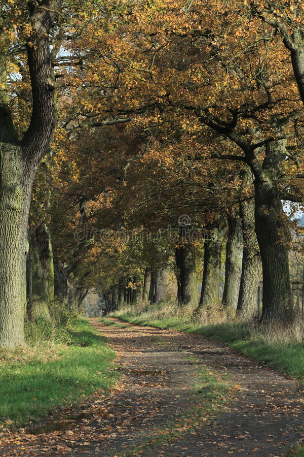 Free Old Oaks Of The Reinhard Forest Stock Images - 46561644