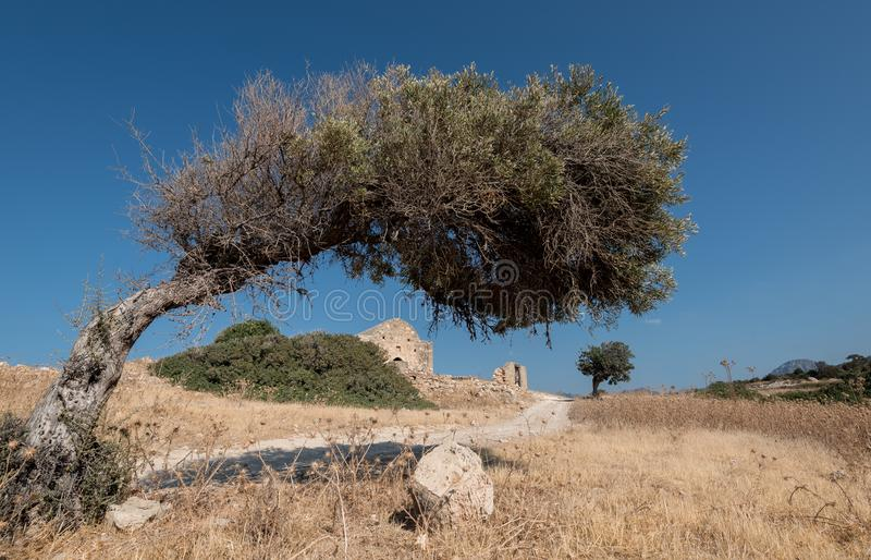 Olive tree and christian church stock images