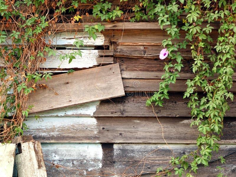 Old Overgrown Woodshack stock photo