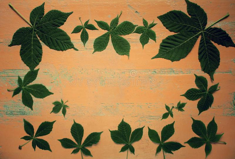 Old painted wooden table with fresh green chestnut leaves. Nature background.Top view. Image is with copy royalty free stock images