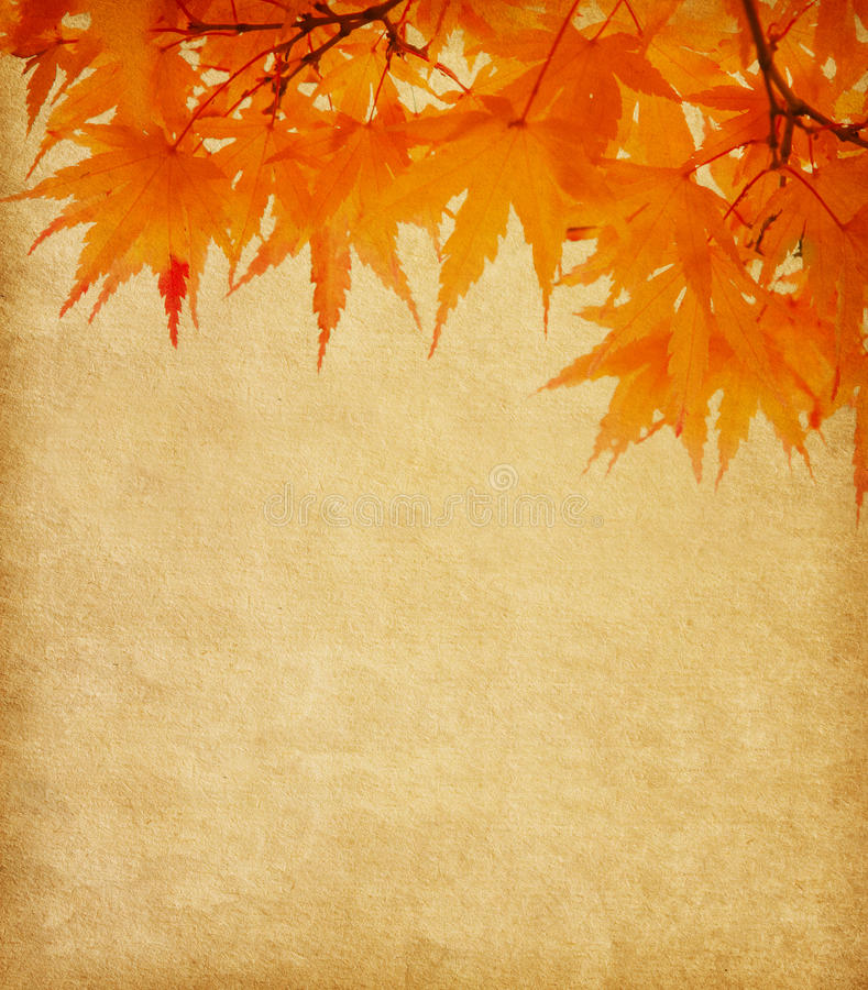 Old paper with autumn leaves royalty free stock photo
