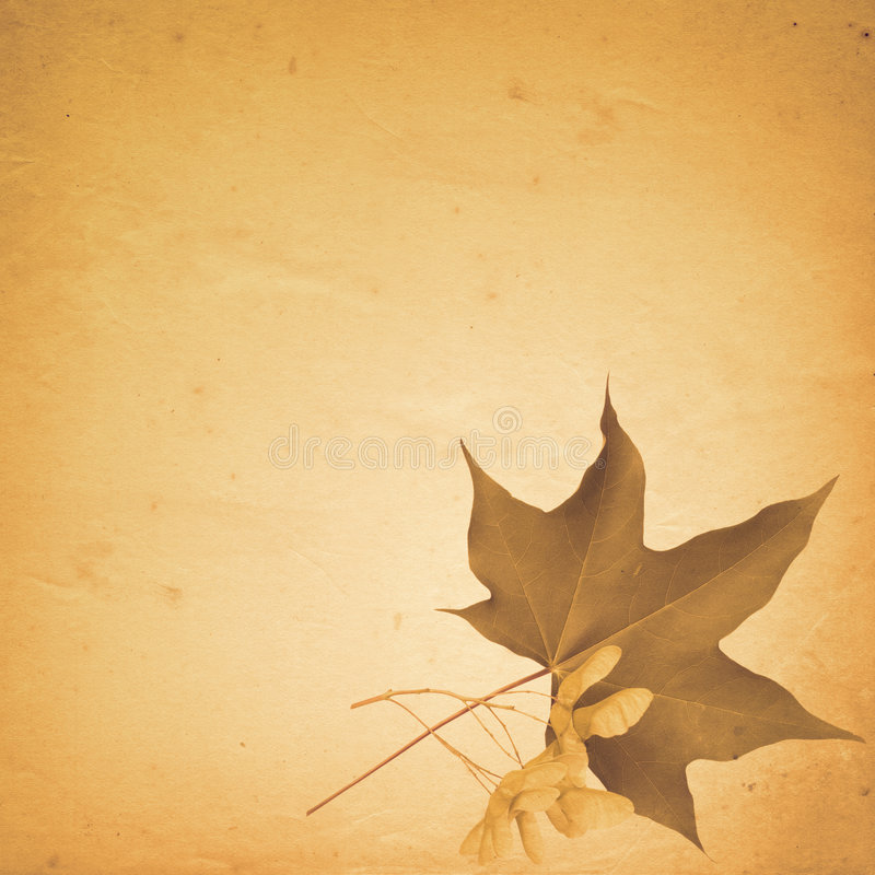 Download Old Paper Background With Maple Leaf And Seeds Stock Illustration - Image: 7724539
