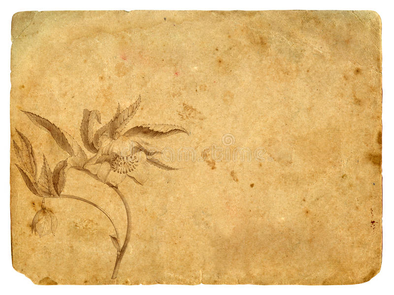 Download Old Paper With A Flower In A Graphic Style Stock Illustration - Image: 23460928