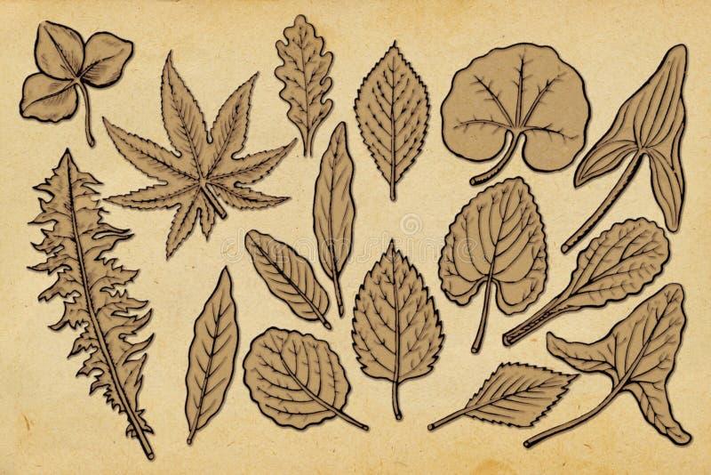 Old paper with leaf vector illustration