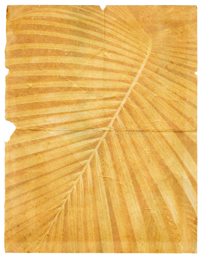 Download Old Paper With Page Torn Textured Palm Leaf Stock Illustration - Image: 26373060