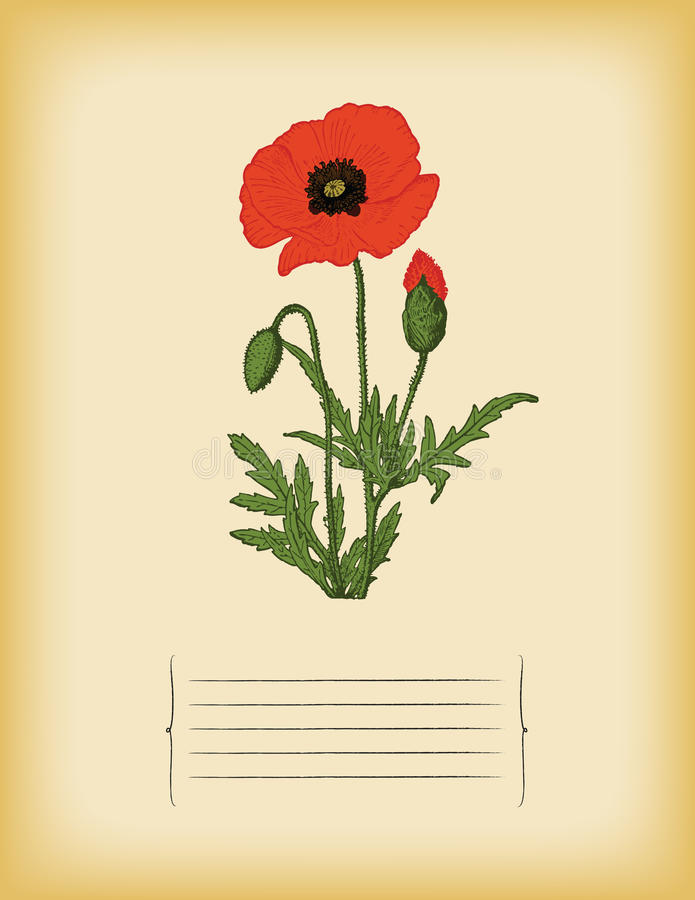 Old paper template with Red Poppy flower. Vector stock photography