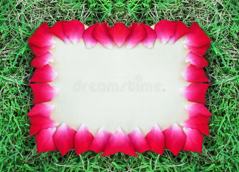 Old paper texture with red roses flower petal edges frame on colorful green grass , copy space for sign  or text valentine  day. Close up Old paper texture with royalty free stock images