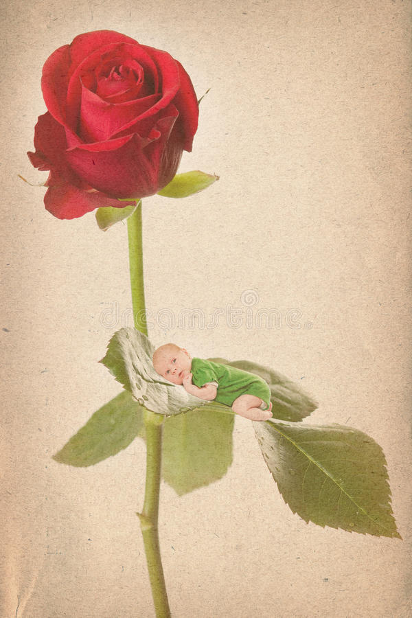 Old paper textures with baby and roses royalty free stock photography
