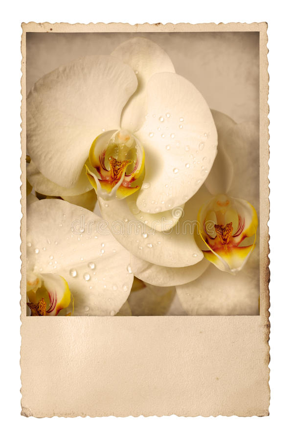 Old Photo With Orchids Stock Photos