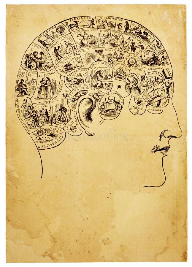 Free Old Phrenology Illustration Stock Image - 18868921