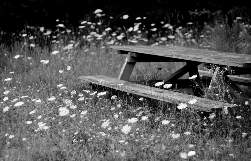 Dine In Wild Lace. An old picnic table sits in a meadow of Queen Anne's Lace near a river. A rather inviting scene in the country royalty free stock photography