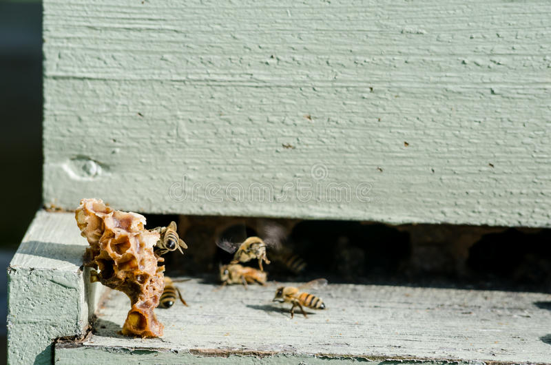 Old piecesof beeswax at entrance to hive stock image