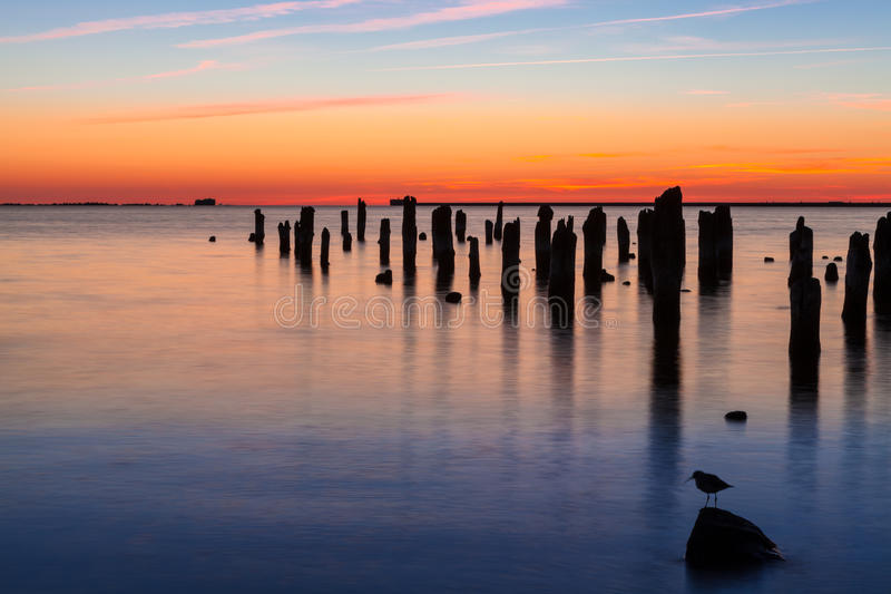 Old pier and bird. Old wooden pier and bird on stone in harbor at sunset stock images