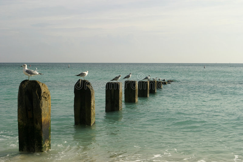 Old Pier With Seagulls. A rotting old pier on the beach in Florida stock photos