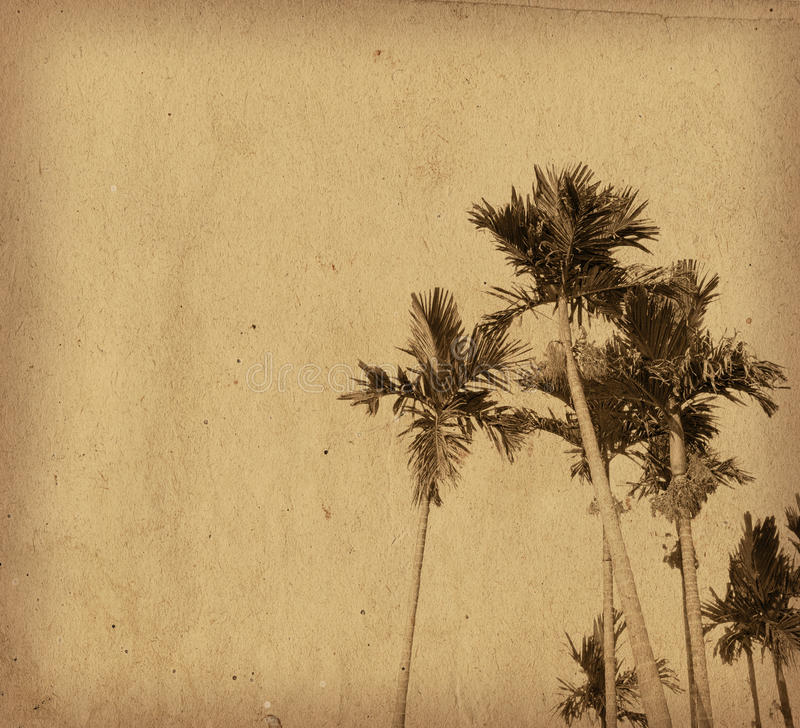 Old plants paper textures. Perfect background with space for text or image royalty free stock photos
