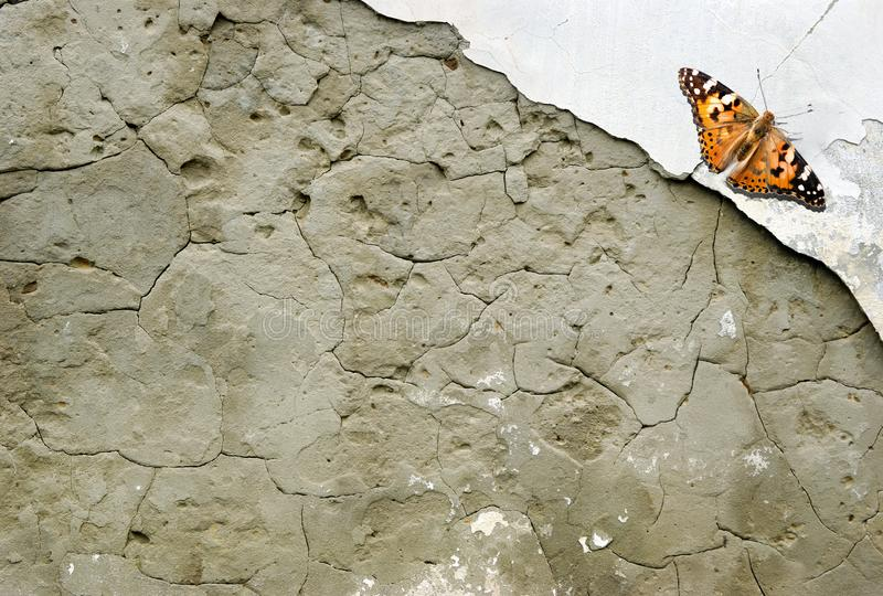Old plaster texture background. copy spaces. beautiful orange butterfly painted lady on an old plastered royalty free stock photos