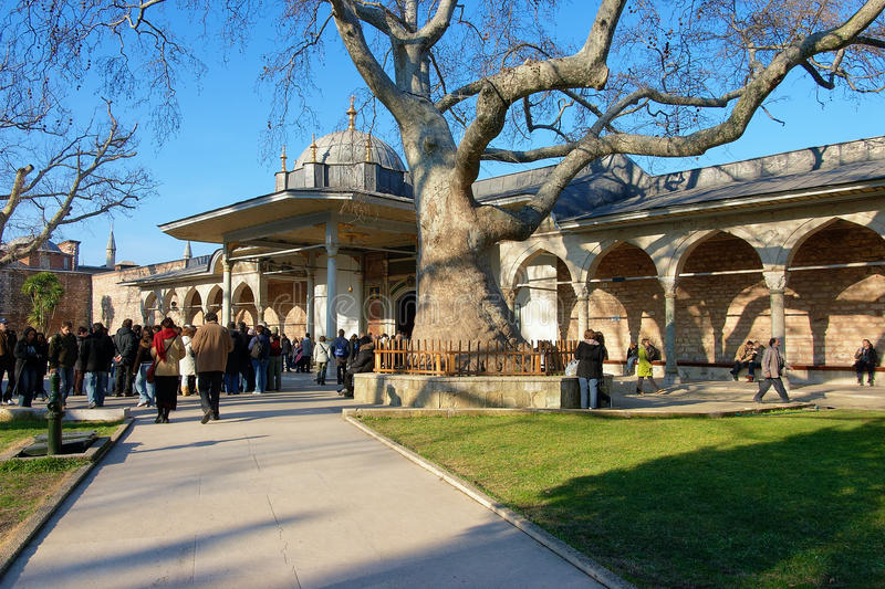Old platanus in the Topkapi Palace in Istanbul royalty free stock photography