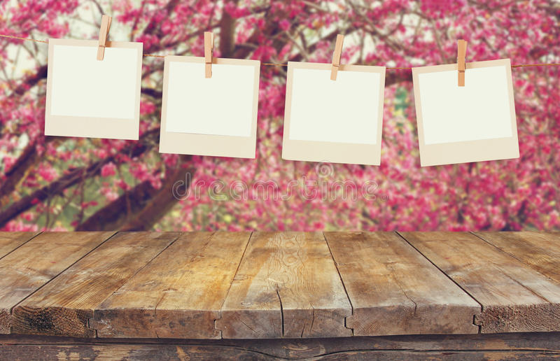 Old polaroid photo frames hanging on a rope over cherry blossom tree landscape.  royalty free stock photography
