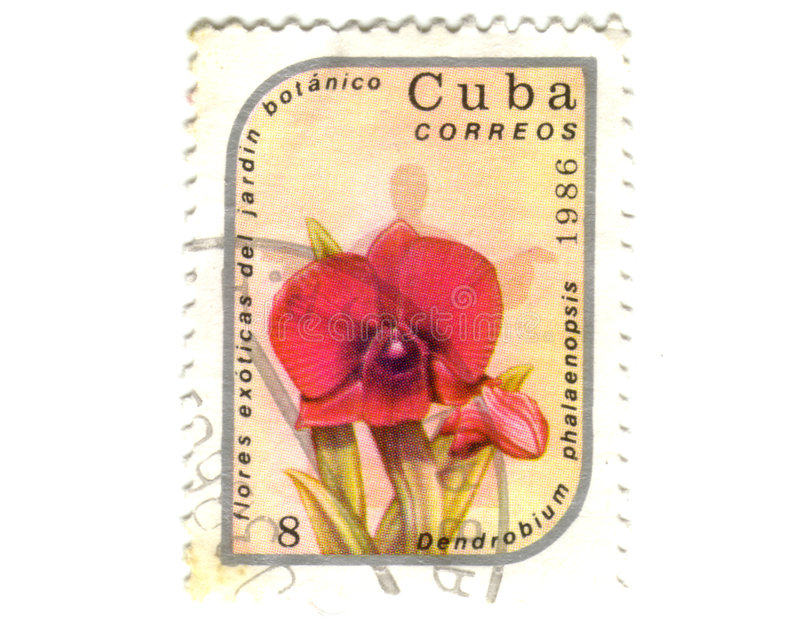 Old postage stamp from Cuba. With flower royalty free stock images