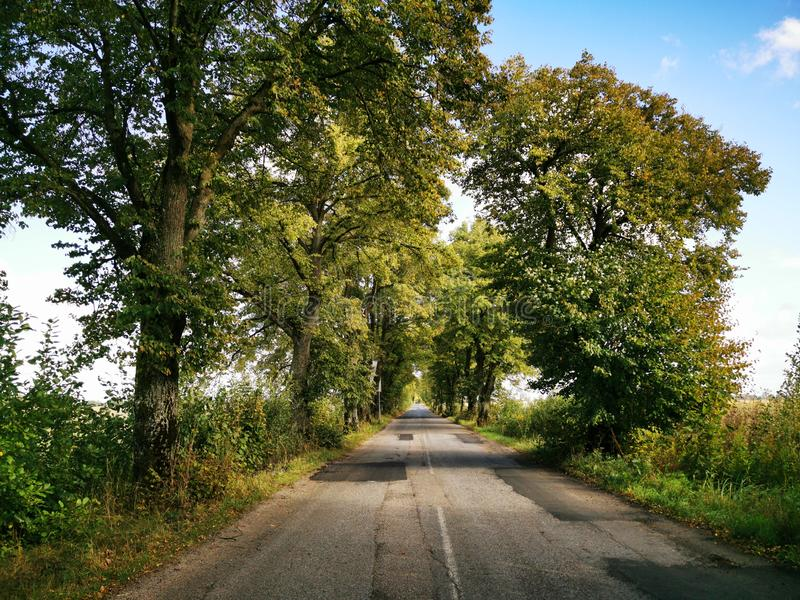 Old Prussian road with trees planted on the roadside stock illustration