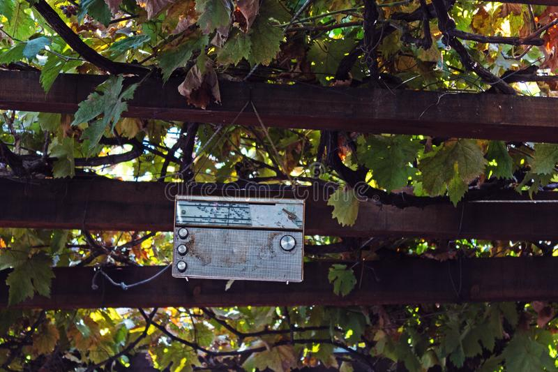 Old Radio hanged among vines royalty free stock images