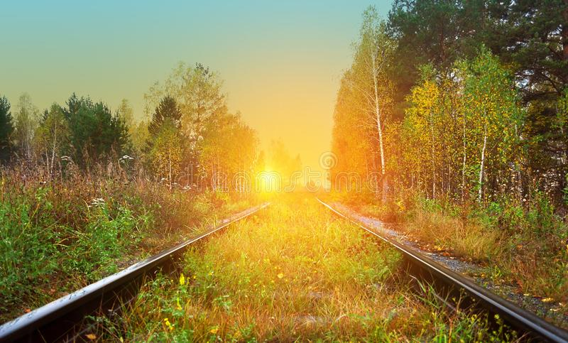 Old railroad passes through a picturesque autumn forest with yellow foliage at sunset lit by the rays of the sun. Old railroad passes through a picturesque stock image