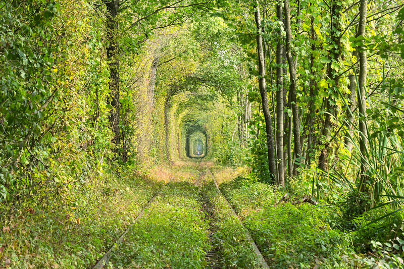 Old railway line. Very long tunnel of trees creates an unusual alley. Tunnel of love - wonderful place created by nature. Klevan stock photo