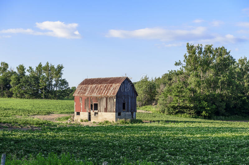 Old red barn on green farmers field. Old red and brown bard on grassy farmers field with trees and blue cloudy sky stock image